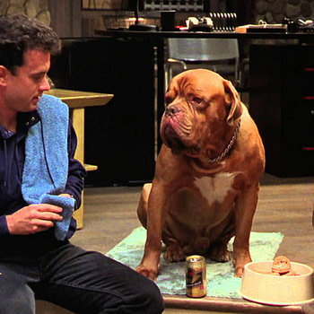 """Turner & Hooch"": Josh Peck Steps into Tom Hanks' Slobbered Shoes in Disney+ TV Reboot"