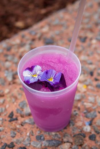 Frozen Desert Violet Lemonade epcot