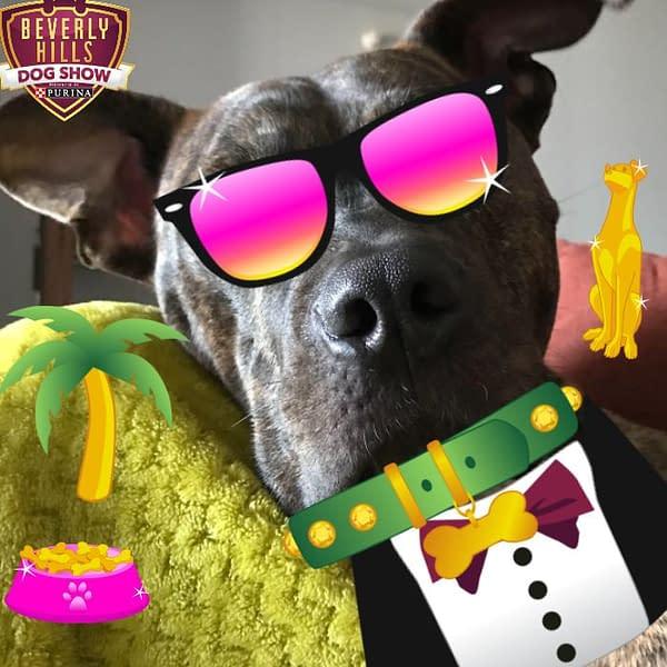 2018 beverly hills dog show live blog