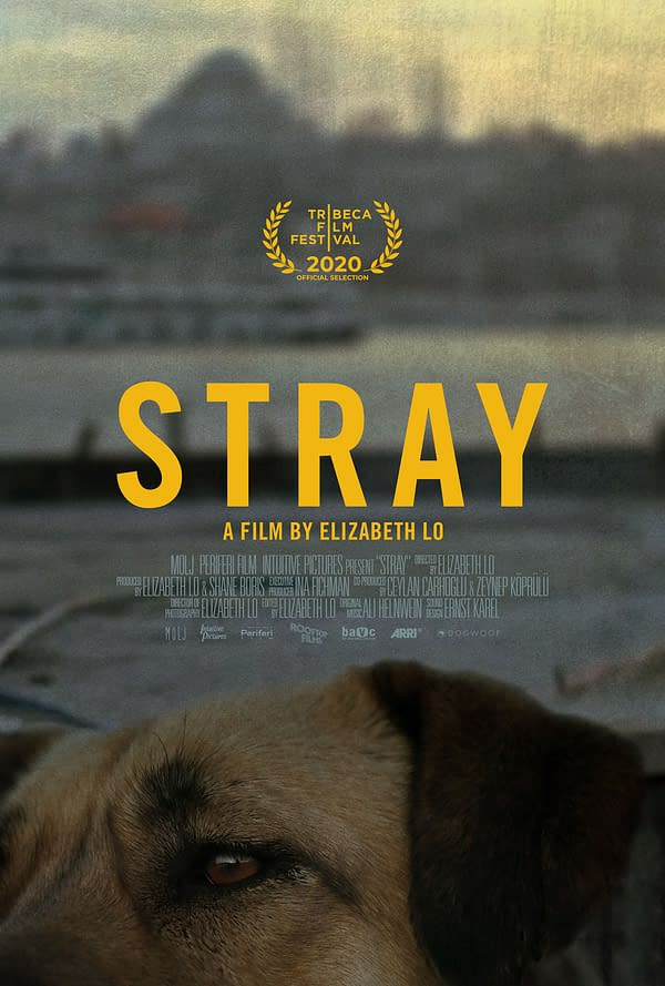 stray_xlg
