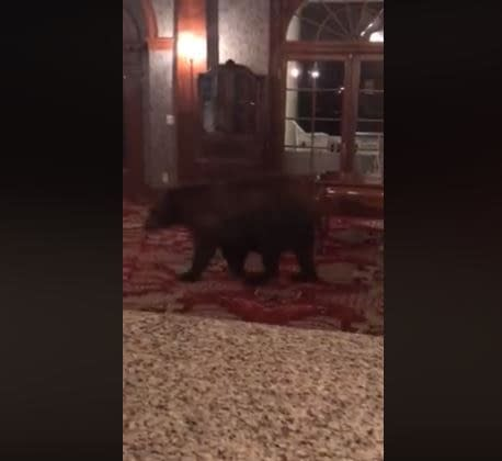 At The Overlook Hotel, All Work and No Honey Makes Bear a Dull Cub
