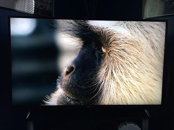 "Finding Our Best Gaming TV: We Review The TCL 55"" Roku TV"