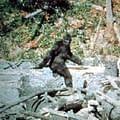 Bobcat Goldthwait Finishing Up His Bigfoot Movie Willow Creek