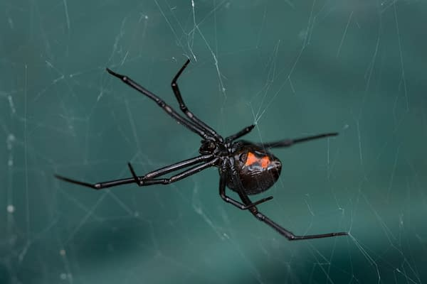 Children Bitten By Black Widow Spiders, Trying to Become Spider-Man.