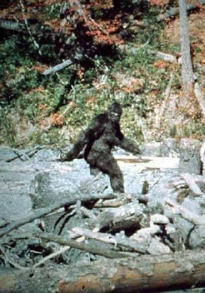Bobcat Goldthwait Finishing Up His Bigfoot Movie, Willow Creek