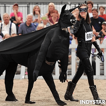 And Finally&#8230 When A Llama Cosplays As A Bat-Llama