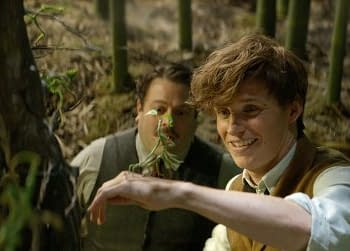 Newt Scamander Wont Be The Main Character Of All The Fantastic Beasts Films