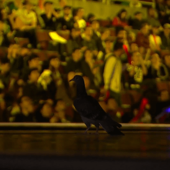 'LoL' Players Get Upstaged By Random Pigeon