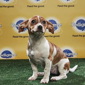 Puppy Bowl XIV: Join Bleeding Cools Animal Planet Live-Blog Tonight