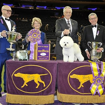 [2018 Westminster Dog Show] Random Thoughts on Day #2 Best in Show
