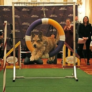 [2018 Westminster Dog Show] Your Dog Show TV Viewing Guide!