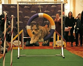 [2018 Westminster Dog Show] Your Dog Show TV Viewing Guide