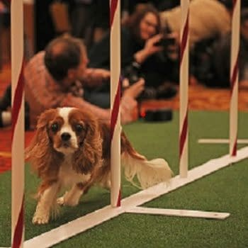 [2018 Westminster Dog Show] Going to the Dogs: Bleeding Cool Live-Blog!