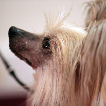 [2018 Westminster Dog Show] Join Bleeding Cool's Dog Show Live Blog!