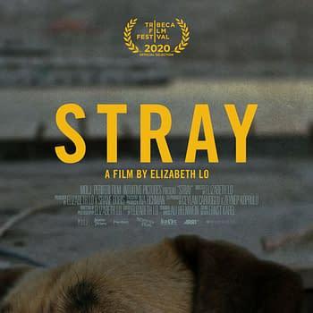 Stray Trailer: Watch As Dogs Wander Around Istanbul