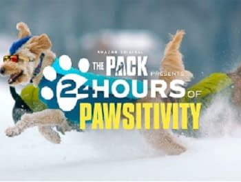 The Pack Presents 24 Hours of Pure Paw-sitivity for Your 2020