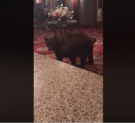 stanley hotel bear shining castle rock