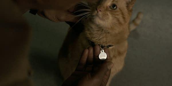 Biggest 'Captain Marvel' SPOILER: Brie Larson is Allergic to Cats