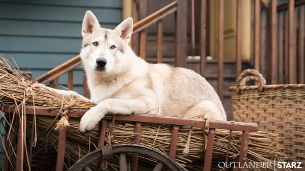 Outlander: STARZ Celebrates Year Of The Dog With Photo of Rollo
