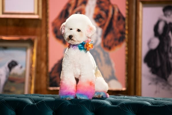 Haute Dog Review: HBO Max Dog Grooming Series is Absolute Paw-fection
