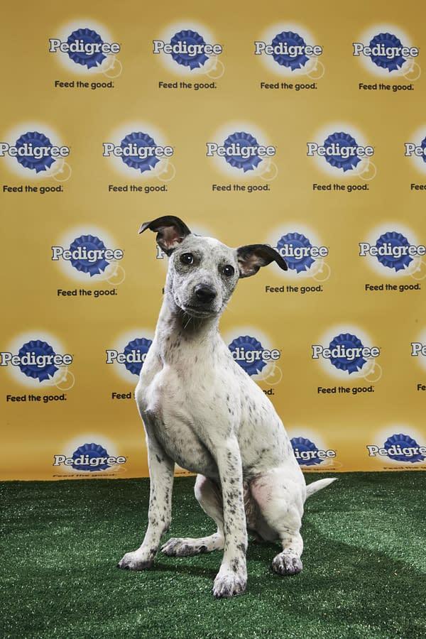 Puppy Bowl XIV: Join Bleeding Cool's Animal Planet Live-Blog Tonight!