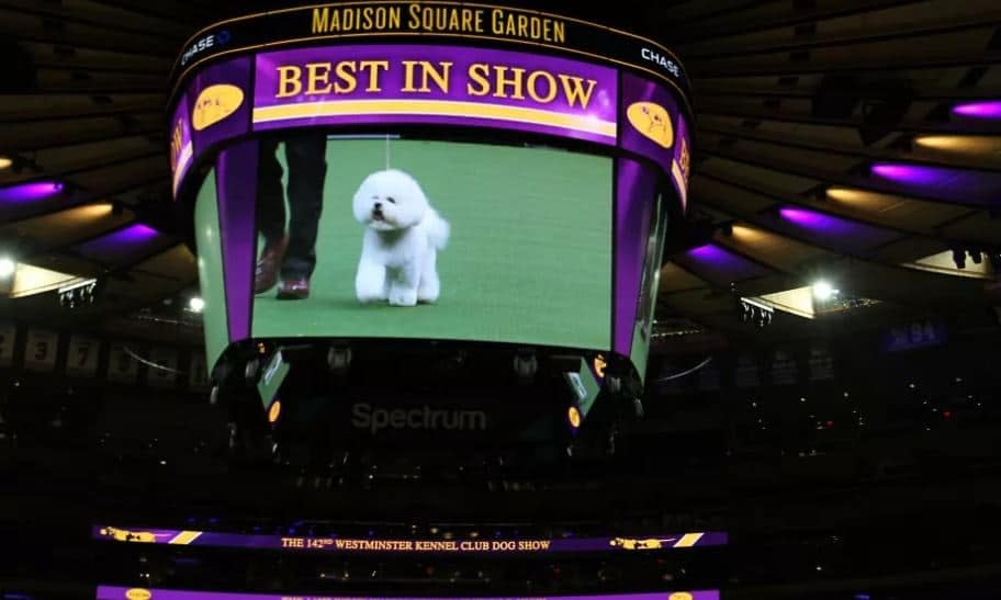[2019 Westminster Kennel Club Dog Show] Your TV/Online Viewing Guide! [VIDEO]