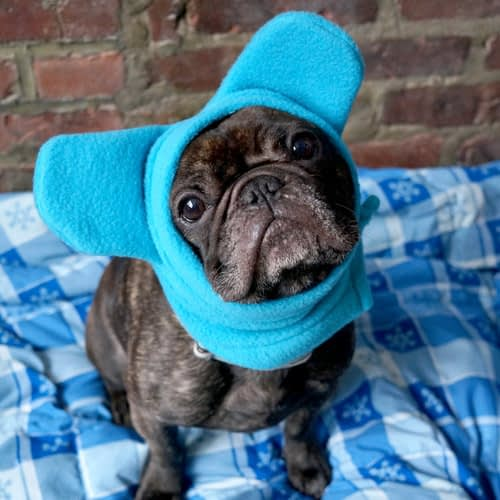Original-BatHat-Frenchie-front