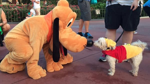 Disney World welcomes dogs at selected hotels